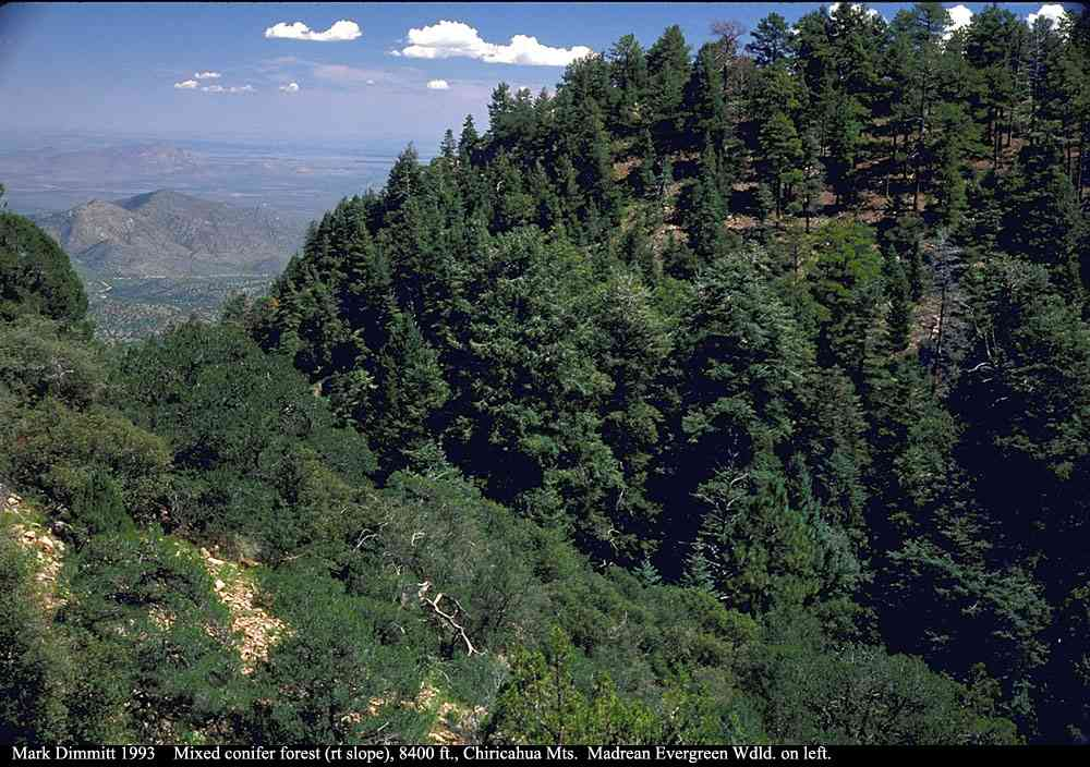 Northwestern coniferous forest climate