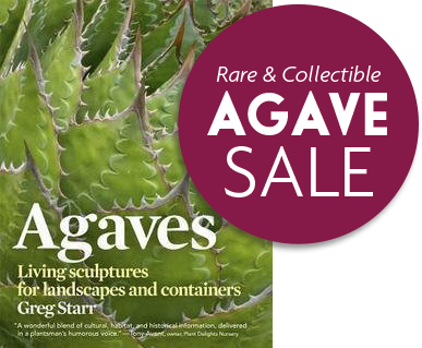 Book cover: Agaves Living sculptures for landscapes and containers, by Greg Starr
