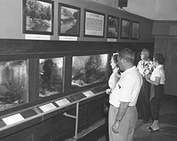 Small_Animal_Room, circa 1950s
