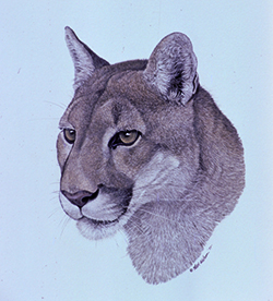 George L Mountainlion by Nick Wilson