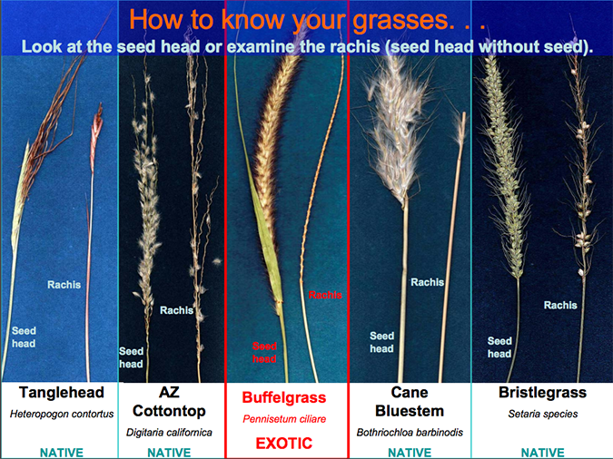 Identification guide to different grasses