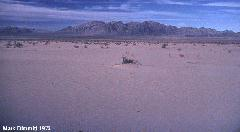 29 Palms drought 1972